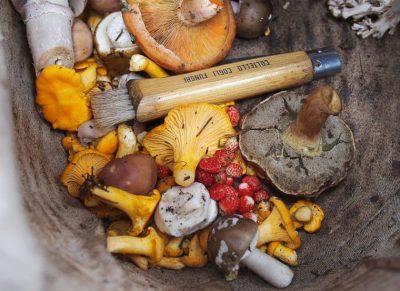 The Magic of Mushroom-Based Supplements