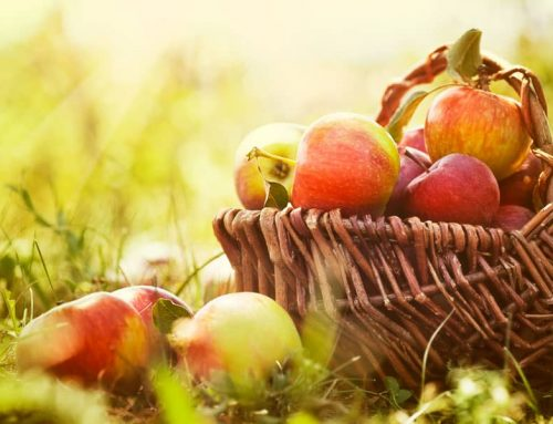 Apple Products are Packed with Health Benefits, and it's Apple Season in Virginia!
